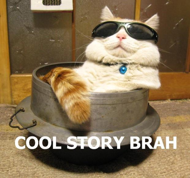 cool_story_brah_cat